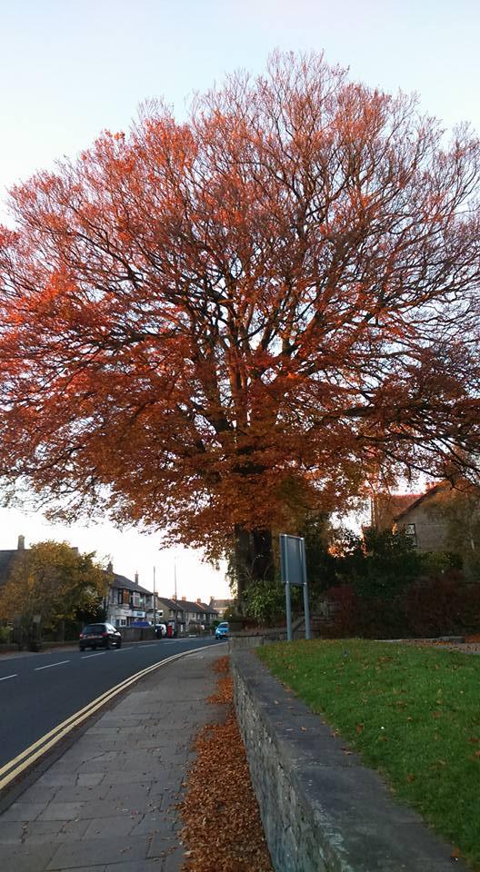 autumn treejpg